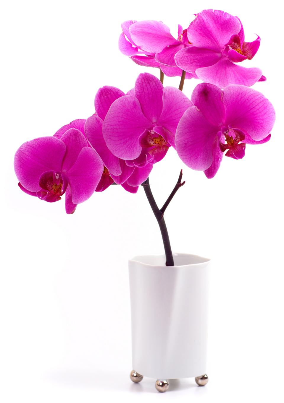 Comment conserver des orchides en pot en intrieur dans la maison